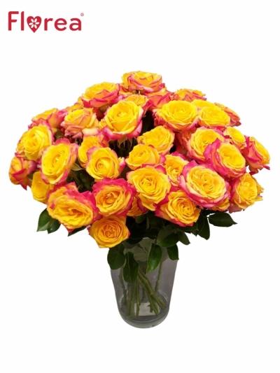 Růže trsová TAHITI