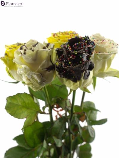 Růže velikonoční mix