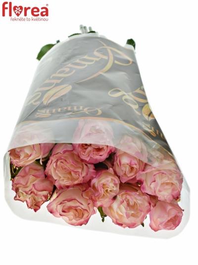 ROSA VERY CUTE 60cm (M)