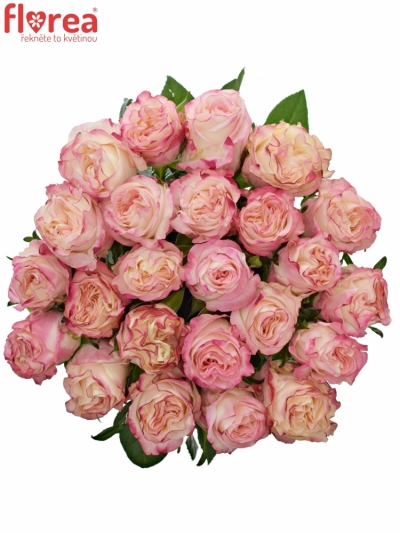 Růže VERY CUTE