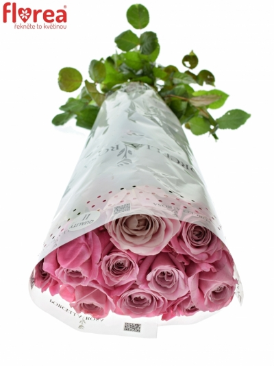 ROSA ALL 4 LOVE+ 100cm (XXL)