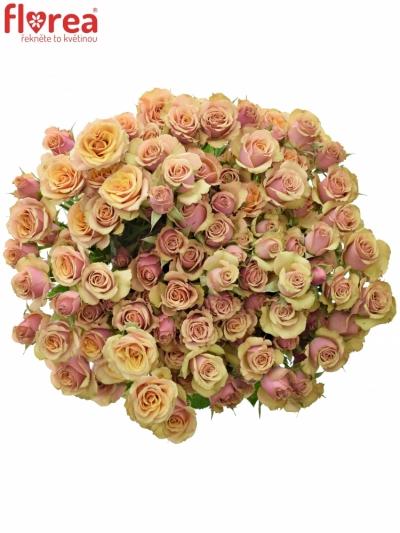 Růžová růže ANTIGUA 40cm (M)