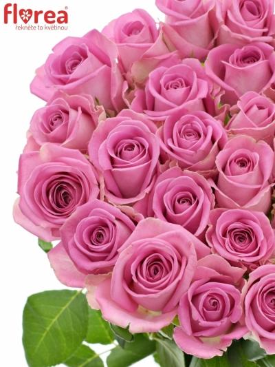 Růžová růže AQUA 55cm