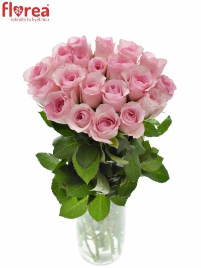 Růžová růže BLUSHING AKITO 40cm
