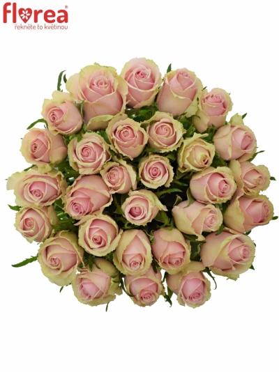 Růžová růže CELY 80cm (L)