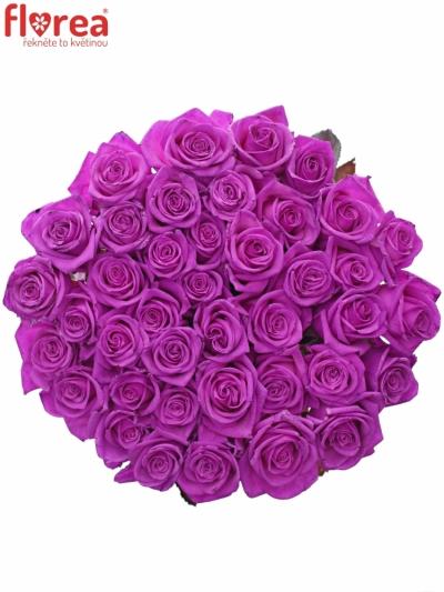 Růžová růže CERISE VENDELA