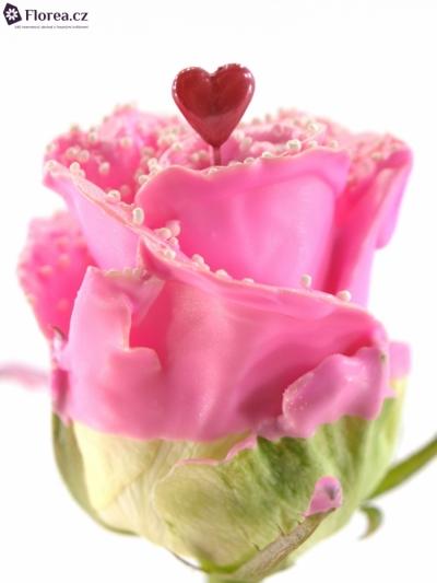 ROSA CHOCOLAT PEARL PINK LOVE 60cm (R 313)