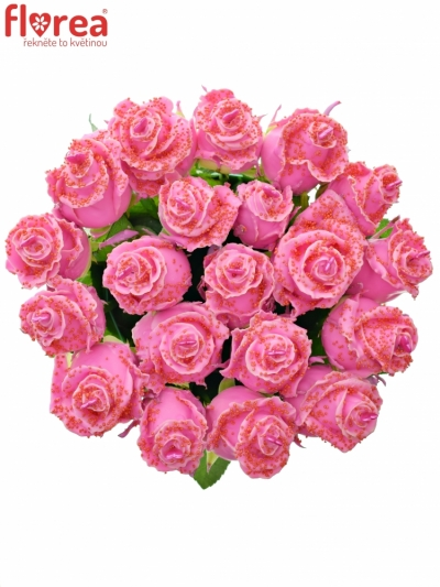 Růžová růže CHOCOLAT RED PEARL PINK LOVE