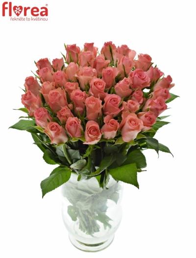 Růžová růže DEKORA 40cm