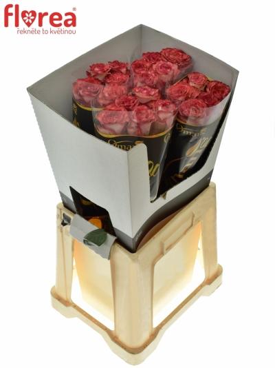 ROSA DIABOLO 80cm (XL)
