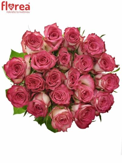 Růžová růže DOUBLE DATE! 60cm