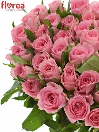 Růžová růže ELIZA