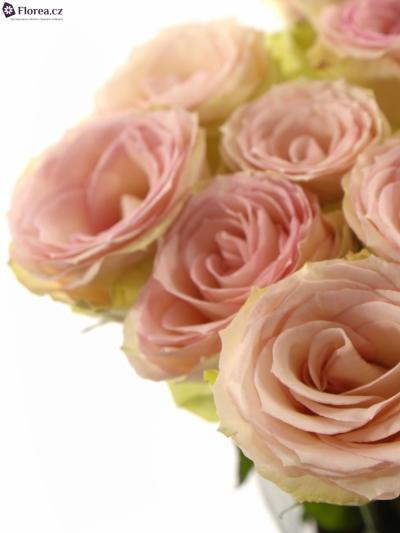 Růžová růže ESPERANCE 70cm