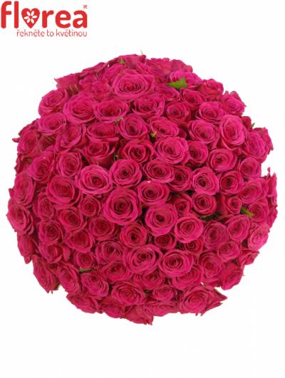 ROSA FUCHSIANA 60cm (M)