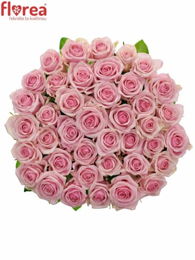 Růžová růže HEAVEN! 50cm (M)