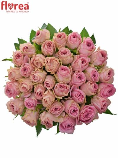 Růžová růže HEIDI!