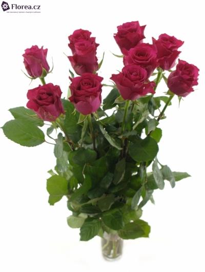 Růžová růže LAYLA