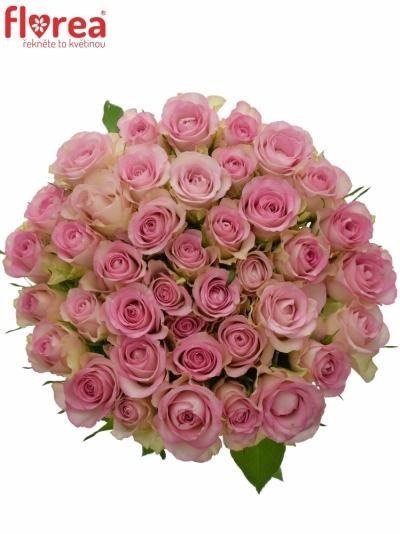 Růžová růže LOVELY JEWEL 35cm