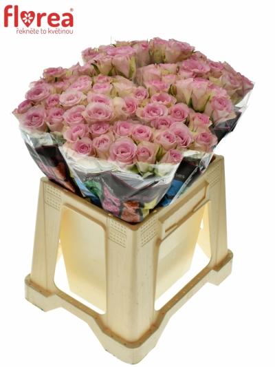 ROSA LOVELY JEWEL 40cm (S)