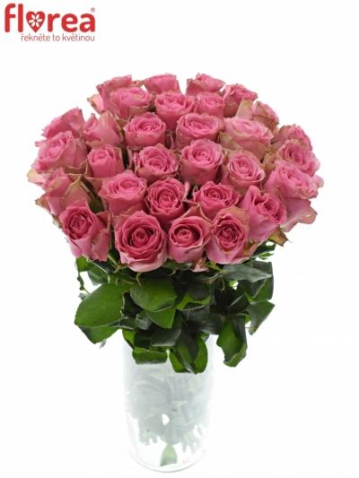 ROSA LOVELY RHODOS 90cm (XXL)