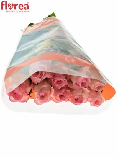 ROSA MALIBU 50cm (XL)