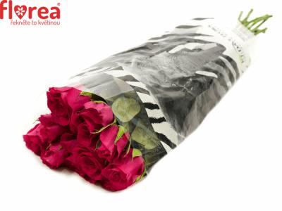 ROSA MEMORY 80cm (M)