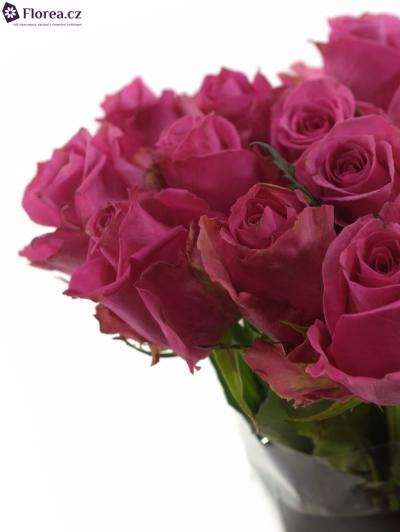 Růžová růže PINK PARTY