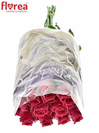 ROSA PINK RHODOS 50cm (M)