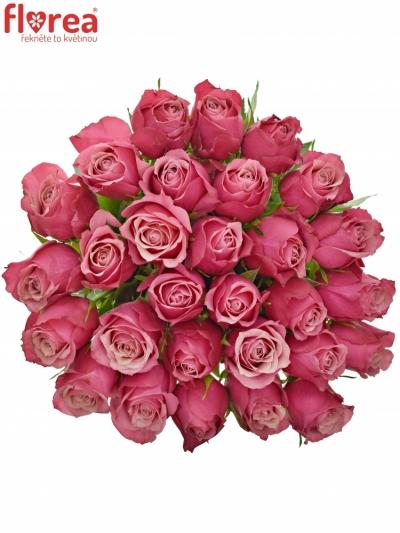 Růžová růže PIPPA 50cm (M)