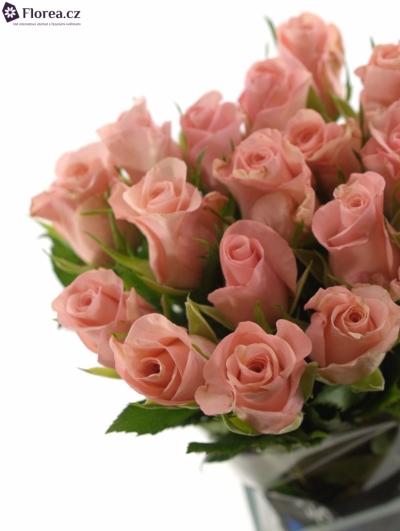 Růžová růže Poeme!