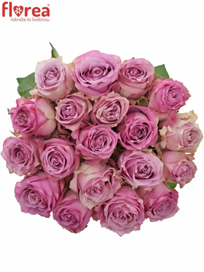 Růžová růže ROSEMARY 50cm (XL)
