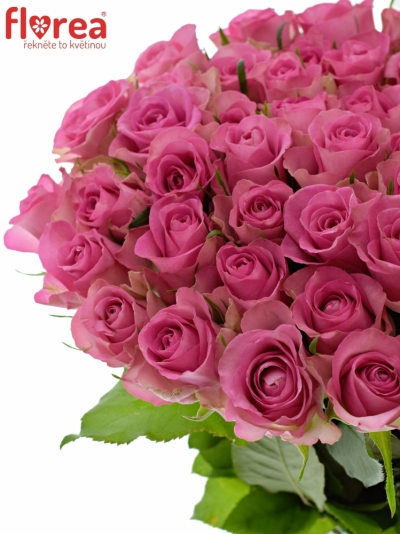 Růžová růže ROYAL JEWEL 50cm (XL)