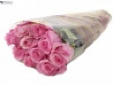 ROSA SANOLI 50cm