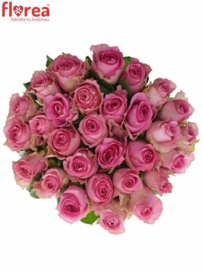 Růžová růže SHANGHAI LADY 50cm (L)