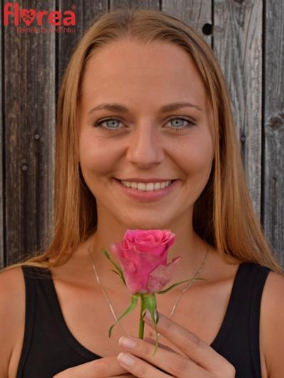 Růžová růže SHIARY 60cm (L)
