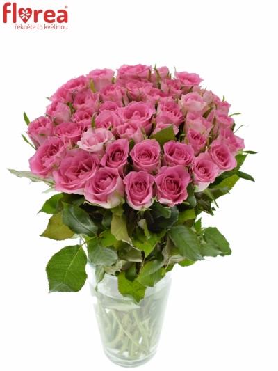 Růžová růže TISENTO 40cm (S)