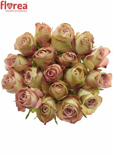 Růžová růže UPPER SECRET