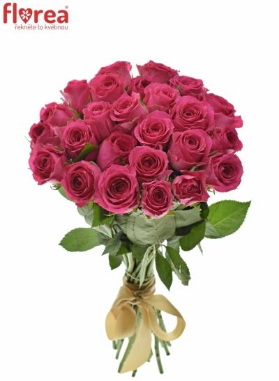 Růžová růže WINK