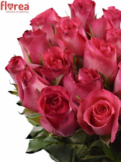 Růžovobílá růže NICOLETTA 50cm