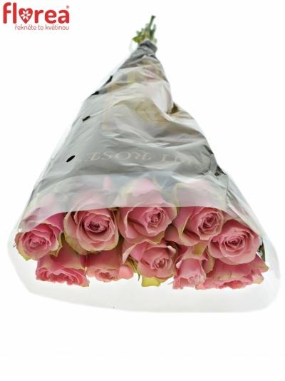ROSA BELLEVUE 70cm