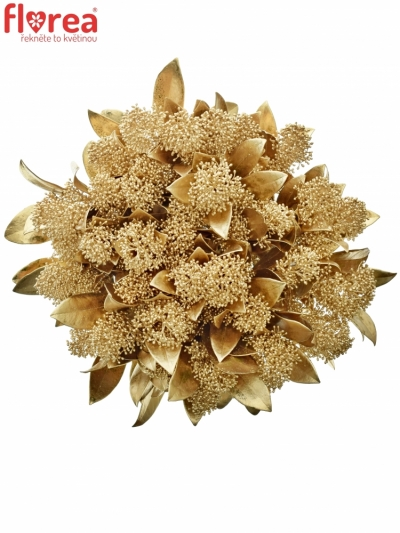 SKIMMIA ANTIQUE GOLD 40cm
