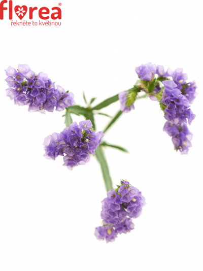 LIMONIUM S NEW HAPPY WING 55cm/20g