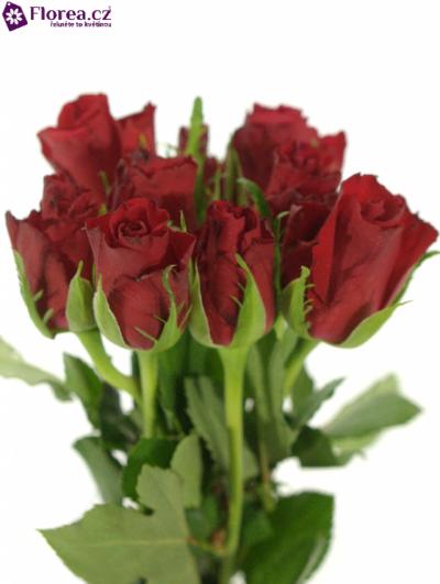 Svazek ROSA RED CALYPSO 30cm (S)