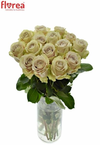 Světle fialová růže EXPOSURE 50cm (XXL)