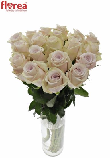 Světle fialová růže SILVERY FLAME 50cm (M)