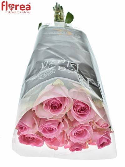 ROSA AVALANCHE SORBET+ 60cm (XL)