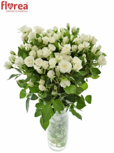 Světlekrémová růže JEANINE 60cm/5+
