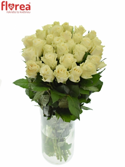 Světlekrémová růže SOLSY 60cm (XL)