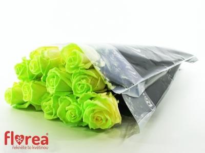 ROSA AVALANCHE GLOW 60cm (L)