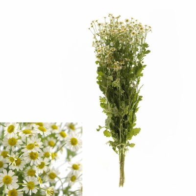 TANACETUM PA SINGLE VEGMO 650g